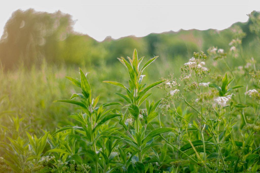 Des plantes dans un champ